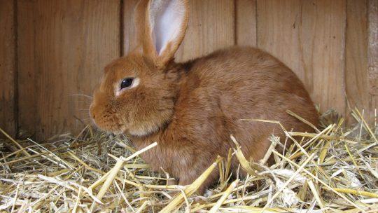 Wat voor konijnenhok moet ik aanschaffen?
