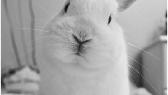 Een konijn aanschaffen is niet zomaar iets